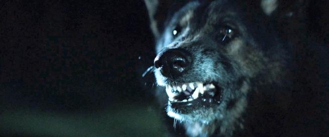 WolfSnarl1